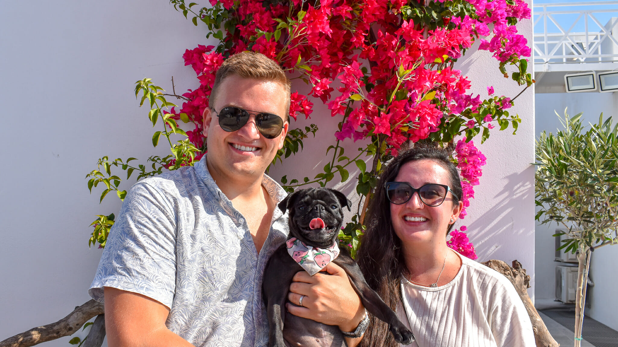 Pebbles the Pug and her parents Hugh and Abbey